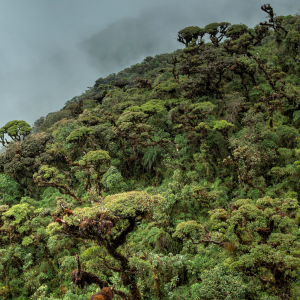 Protecting nature in Ecuador