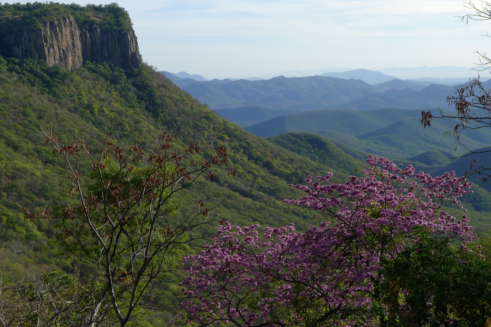 Tropical Deciduous Forests - Nature and Culture International