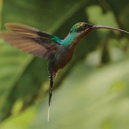Nature and Culture International has protected ecosystems in Peru including 5.5 million acres of Amazon rainforest
