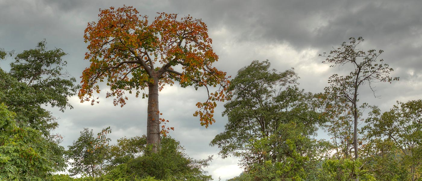 Tropical Deciduous Forest, Ecuador