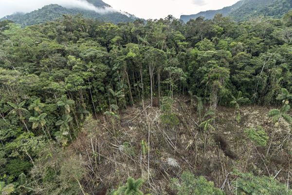 Climate change and Mexico ecosystems – deforestation