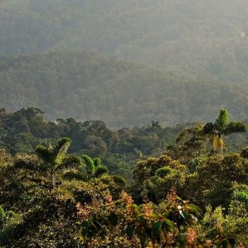 The cloud forests of the new Cacica Noría Regional Protected Area in all its glory! Photo: Adolfo Correa-CorAntioquia