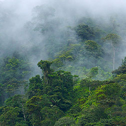 Andean Cloud Forests