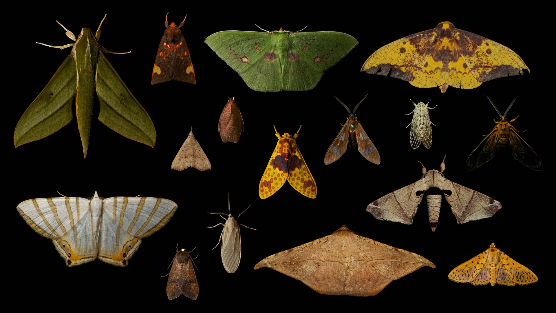 CloudForest Moths