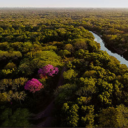 Gran Chaco dry forest