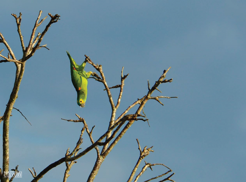 Bird hanging in Brazil's Pantanal.